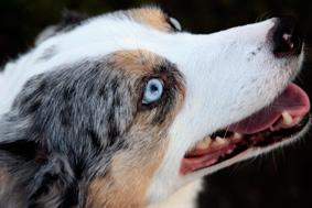 dog3134