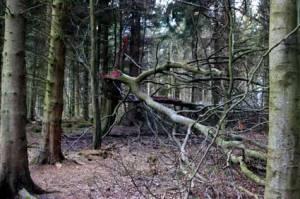 wood4547