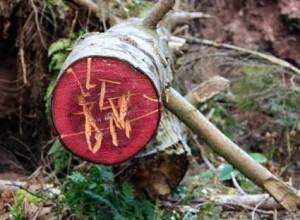 wood4567