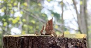 wood4568
