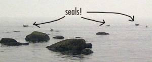 seals04901