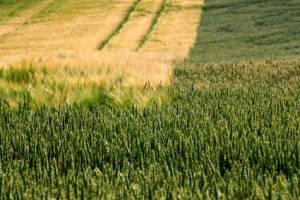 fields5666