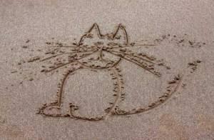 cat6767