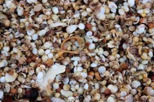 shells6704