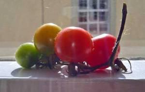 tomatoes05414