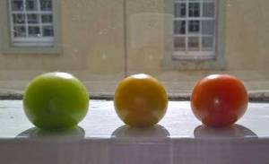 tomatoes05416