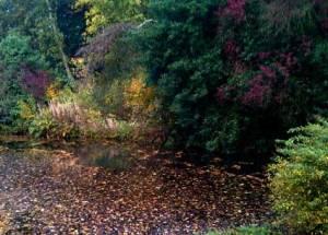 autumn05662