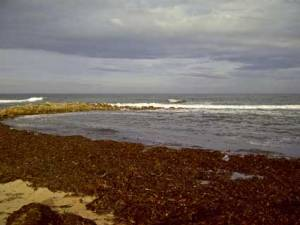 Kingsbarns05535