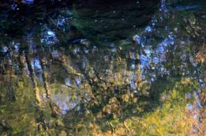 reflections7137