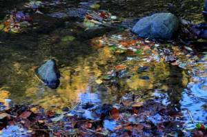 reflections7167