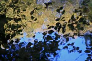 reflections7185