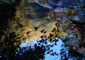 reflections7187