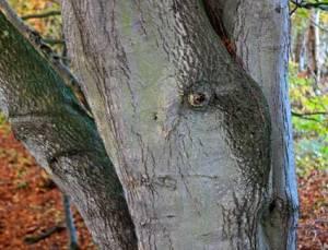 treeface7312
