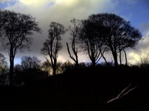 trees04718
