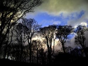 trees04721