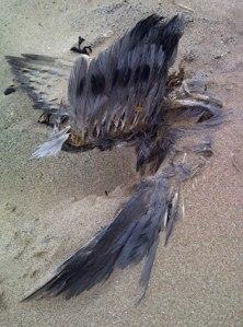 bird06520