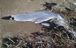 bird06523