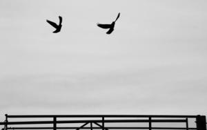 bird3790