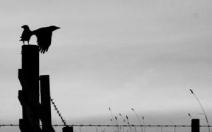 bird3791