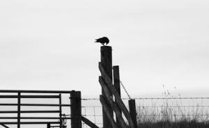 bird3793
