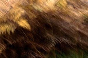 blur_3878