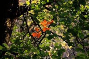 trees_4004