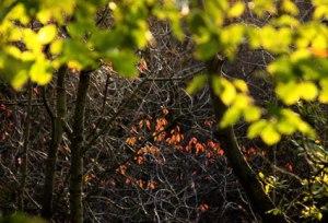 trees_4007