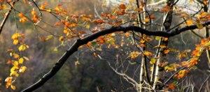 trees_4020