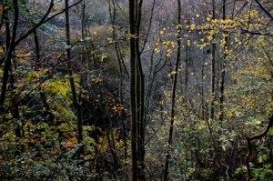 trees_4026