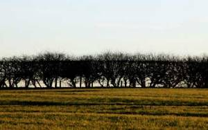hedges_4950