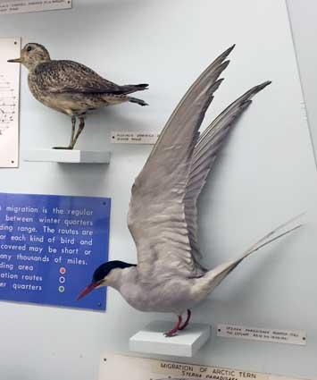 bird1BP