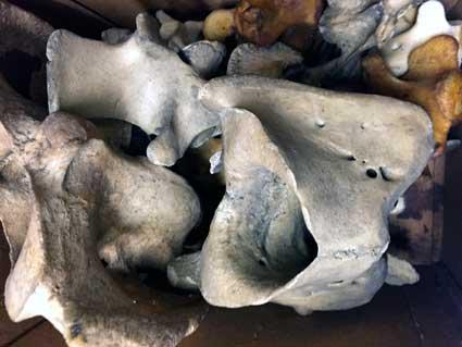 bones5998