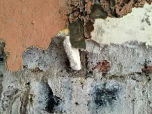 plaster15.15.47