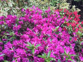 flowers_2285