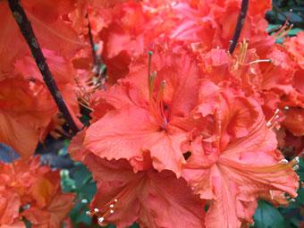flowers_2286