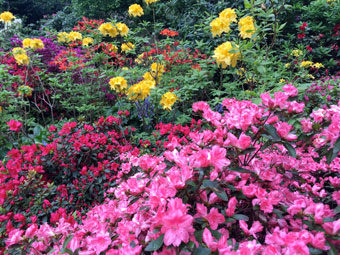 flowers_2292
