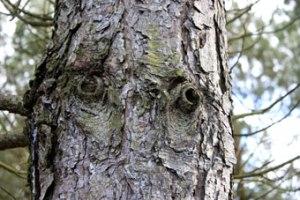 wood_8534