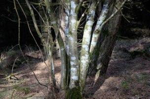 wood_8548