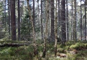 wood_8569