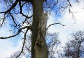 trees_8651