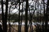 trees_8668