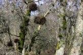 trees_8684