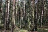 trees_8686