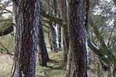 trees_8692