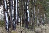 trees_8696