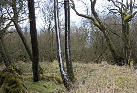 trees_8711