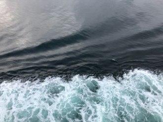 ferry1460