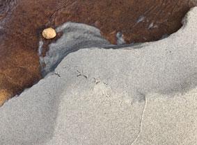 beach_7185
