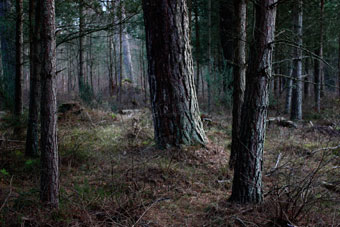 forest_7745