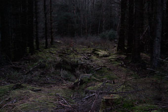forest_7841
